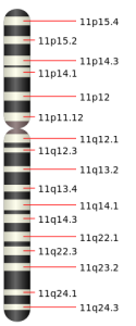 chromosome 11 schematic